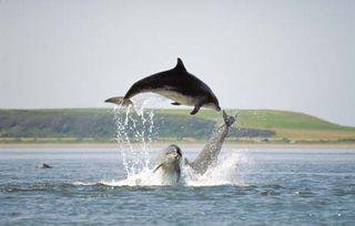 Moraydolphins