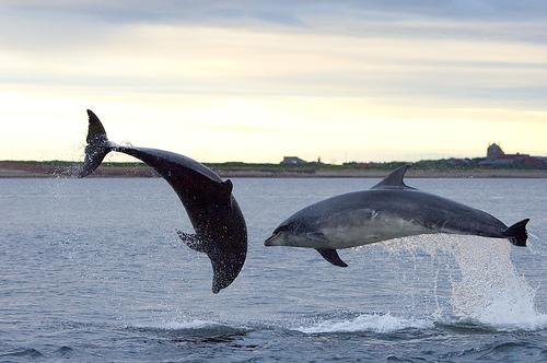 Bottlenosedolphins