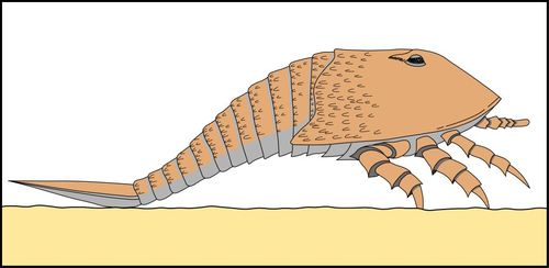 Scorpion artist impression copyright Martin Whyte