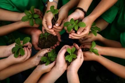 Plants in hands