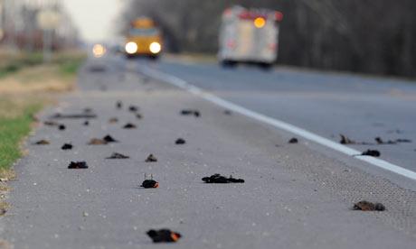 Dead birds in Louisiana