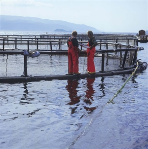 Workers on salmon cage