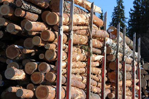 Wood to burn?