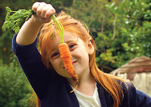 Carrot growing (photo thanks to fifediet.co.uk)