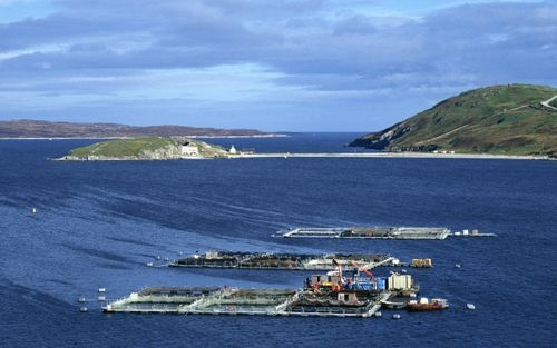 Fish farm in Scotland