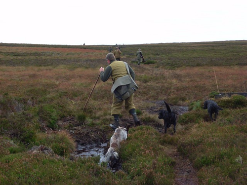 Driven grouse shoot